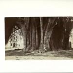 arbre , Mexique , lieu innommé